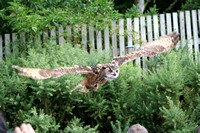 Wild life ( Chester Zoo & Dartmouth Birds  of Prey)